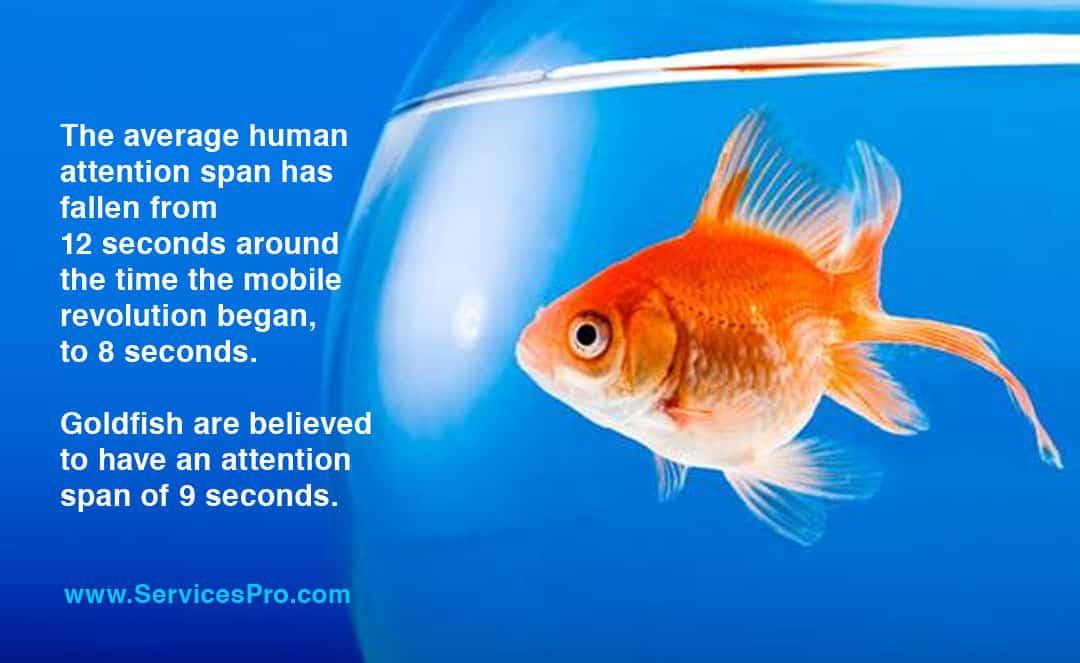 social media goldfish attention span